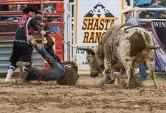 Bull fou Images stock