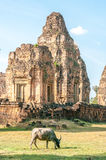 Bull in front of Cambodian temple. A bull grazes in front of Cambodian temple ruin stock photography