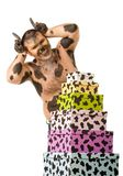 Bull with gifts Royalty Free Stock Photos