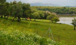 Bull  habitat Royalty Free Stock Photography