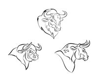 Bull head Stock Photos