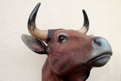Bull head Royalty Free Stock Photos