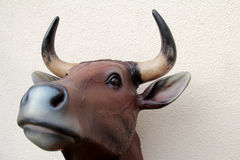 Bull head Stock Photo