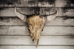 Bull head skull hanging on wood wall Royalty Free Stock Photography