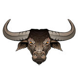 Bull head Royalty Free Stock Image
