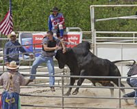 Bull Headbutting Man Stock Photography