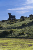 Bull on the hill royalty free stock image
