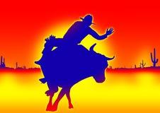 Bull-Konkurrenz Lizenzfreie Stockbilder