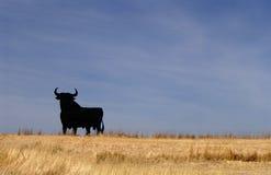 Bull - la Spagna Fotografia Stock Libera da Diritti