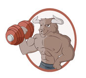 The bull is lifting a dumbbell Stock Photography
