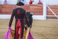 Bull looking at the toreador's crutch in a bullfight. Spain Royalty Free Stock Image