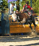 Bull-Mitfahrer 1 lizenzfreie stockfotografie