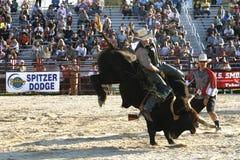 Bull-Mitfahrer Stockbild