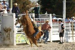 Bull-Mitfahrer Stockfoto