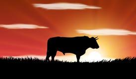 Bull no campo em Spain Fotos de Stock Royalty Free