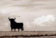 Free Bull Of Spain Royalty Free Stock Image - 1603276