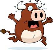Bull Panic Royalty Free Stock Photos