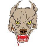 bull pit Obrazy Stock