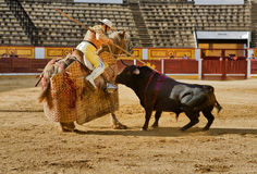 Bull pushing Stock Photography
