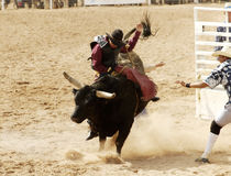 Bull que monta 3 Imagens de Stock
