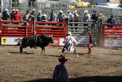 Bull que vai após palhaços após o cavaleiro começ bucked fotografia de stock royalty free