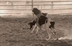 Bull-Reiter Stockfoto