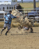 Bull Ride Rodeo. Bull riding competition at the rodeo Stock Photos