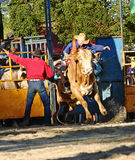 Bull Rider 2 Royalty Free Stock Image