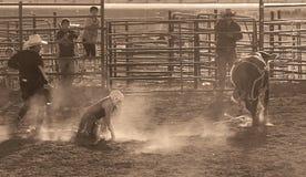 Bull rider. BRICE CANYON CITY, UTAH - JUNE 25: Bull riders and bull at a rodeo show at Ruby's Inn Bryce Canyon Country Rodeo on June 25, 2011 in Brice Canyon Royalty Free Stock Image