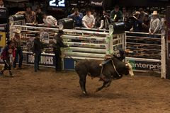 Professional Bull Rider tournament on Madison Square Garden stock images