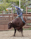 Bull Rider. Event:  2016 High School Rodeo Royalty Free Stock Photography