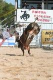 Bull rider 3. Bull rider falling off Royalty Free Stock Photos