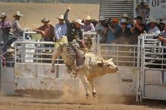 Bull Rider Gets Airborne imagenes de archivo