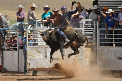 Bull Rider Gets Airborne. A cowboy challenges a 2,000 bull during the annual rodeo located in Galiesto, New Mexico on July 21, 2013 royalty free stock images