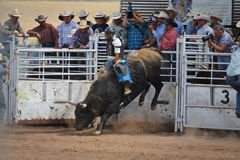 Bull Rider Gets Airborne. A cowboy challenges a 2,000 bull during the annual rodeo located in Galiesto, New Mexico on July 21, 2013 royalty free stock photography