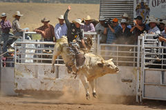 Bull Rider Gets Airborne. A cowboy challenges a 2,000 bull during the annual rodeo located in Galiesto, New Mexico on July 21, 2013 stock images