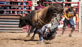 Bull Rider Gets Tossed Royalty Free Stock Photography