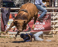Bull Rider Goes Down Royalty Free Stock Images