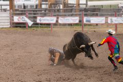 Bull Rider is having a bad day Stock Images