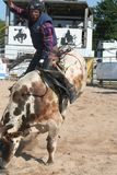 Bull rider 2. Bull rider rodeo Royalty Free Stock Images