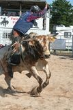 Bull rider. Rodeo Royalty Free Stock Images
