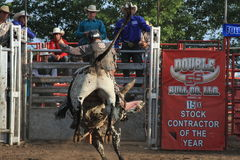 Bull rider Royalty Free Stock Image