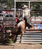 Bull Rider Success Stock Image