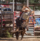 Bull Rider Success Royalty Free Stock Photos