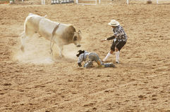 Bull riding 10. The bull riding event at a rodeo in Arizona Stock Image