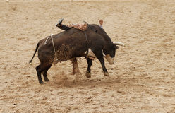 Bull riding 11. The bull riding event at a rodeo in Arizona Royalty Free Stock Image