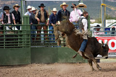 Bull riding. APACHE JUNCTION, AZ - FEBRUARY 26: A cowboy rides a bucking bull in the bull riding competition at the Lost Dutchman Days Rodeo on February 26, 2010 royalty free stock photo