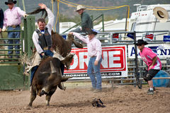 Bull riding. APACHE JUNCTION, AZ - FEBRUARY 26: A cowboy rides a bucking bull in the bull riding competition at the Lost Dutchman Days Rodeo on February 26, 2010 royalty free stock photos