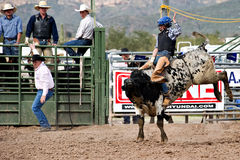 Bull riding. APACHE JUNCTION, AZ - FEBRUARY 26: A cowboy rides a bucking bull in the bull riding competition at the Lost Dutchman Days Rodeo on February 26, 2010 stock images