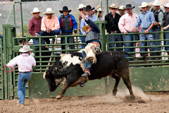 Bull riding. APACHE JUNCTION, AZ - FEBRUARY 26: A cowboy rides a bucking bull in the bull riding competition at the Lost Dutchman Days Rodeo on February 26, 2010 royalty free stock photography